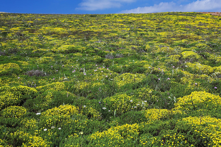 Steppe wildflowers