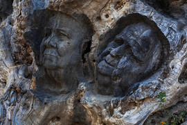 Faces of people carved in a dead olive tree trunk