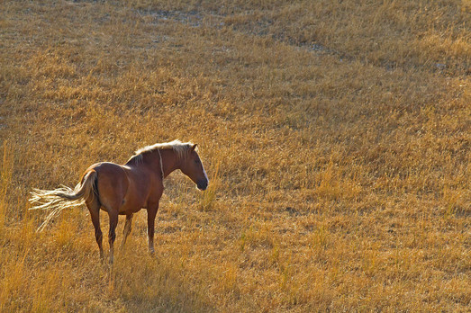 Andalucian horse backlit by late afternoon light