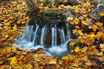 Forest spring in autumn