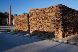 Cork bark stockpiled