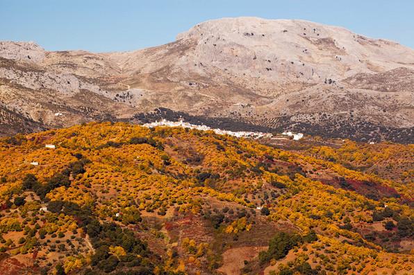Castanea forest in autumn