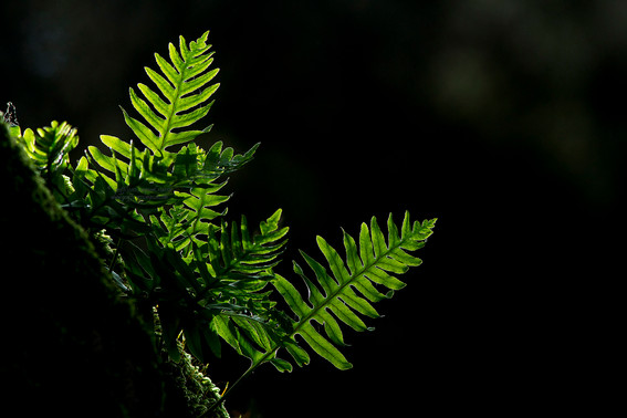Ferns backlit copy.jpg