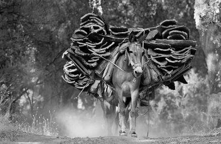 Cork harvest mule