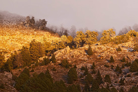 Abies Pinsapo forest bathed in late afternoon light