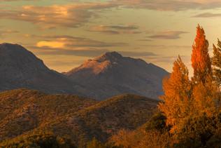 White poplar trees in autumn - Valle del Guadiaro
