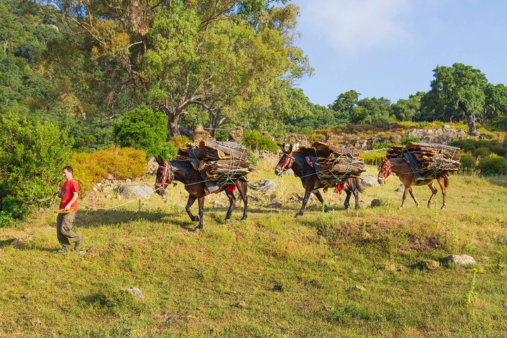 Cork mule train on the edge of the cork forest