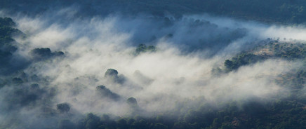 Mist shrouded Cork oak forest  Los Alcornocales