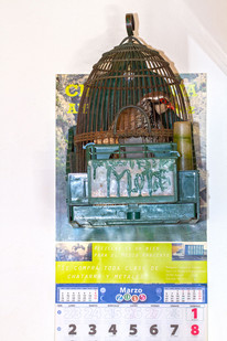 Red-legged or French partridge, Alectoris rufa caged in a bar (cruelty)