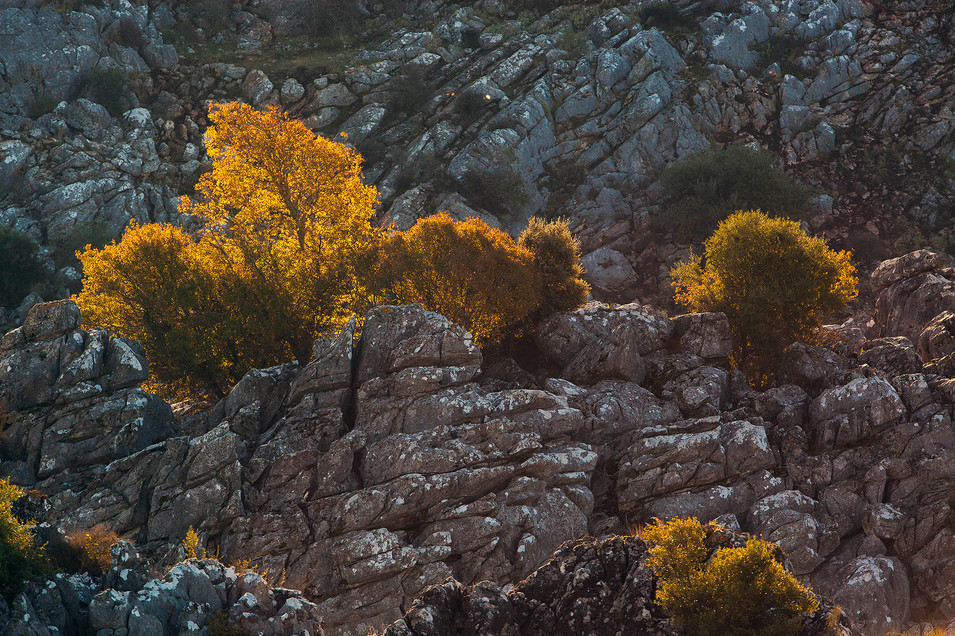 Backlit trees growing in limestone cliff ledge - Montejaque