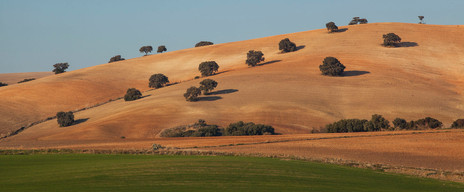 Cork oaks and Andalucian farmland