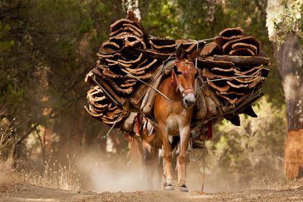 Cork mule
