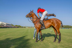 Mounting a polo pony