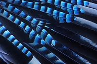 Wix Jay's wing detail.jpg