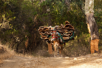 Cork mule carrying cork bark