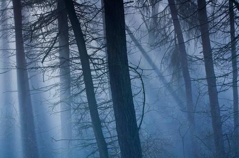 Sunbeams through woodland - Abney