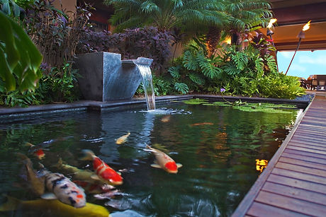 Hawaii-Koi-Pond.jpg