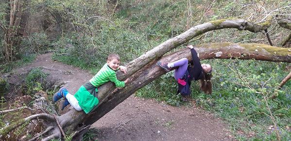 Maya tree climbing.jpg