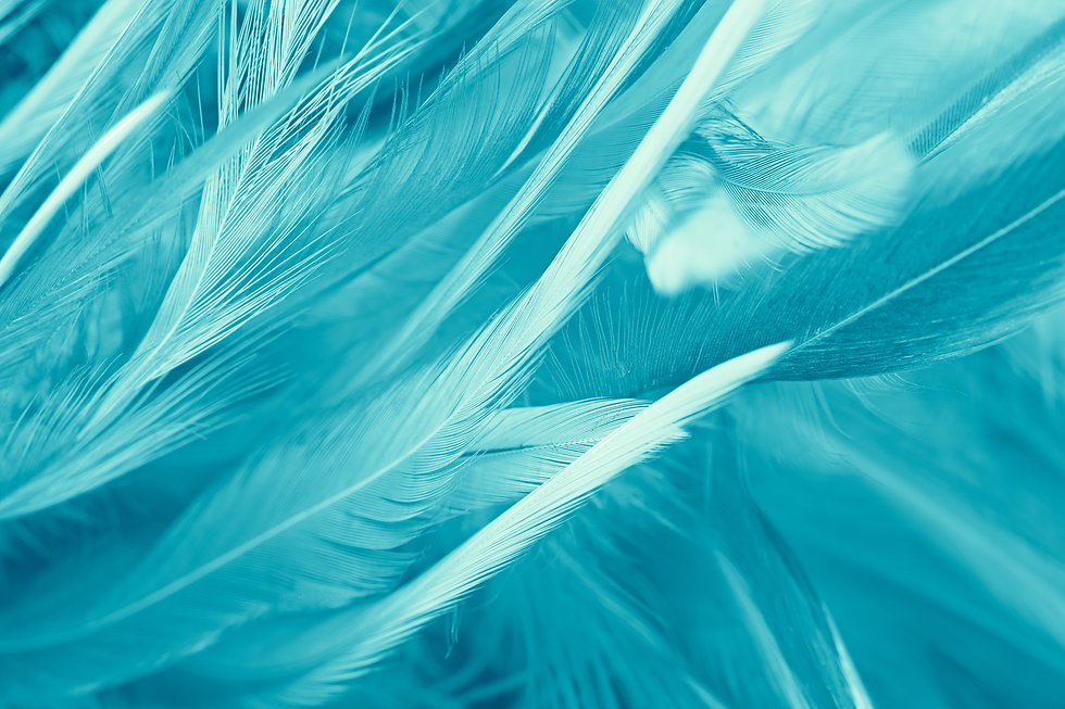 green turquoise vintage color trends feather texture background.jpg