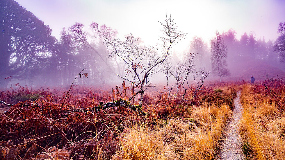 ©Mathilde Bozier - AGENCE OUT OF FRAME - Série photographique - Paysages en dormance