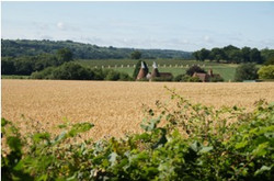 Countryside with oast houses