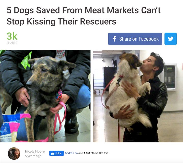 5 Dogs Saved From Meat Markets Can't Stop Kissing Their Rescuers