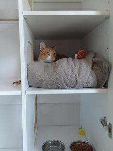 Cat Room.jpg
