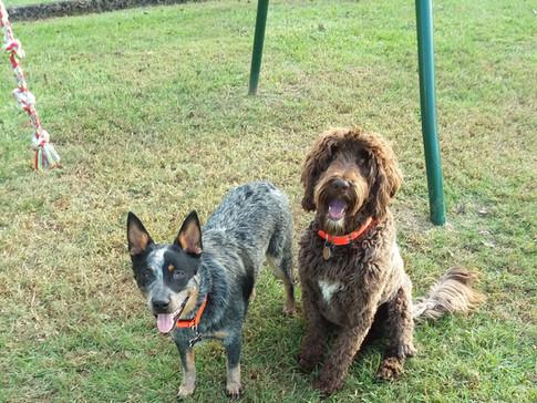 Rowdy and Brown Dog.jpg