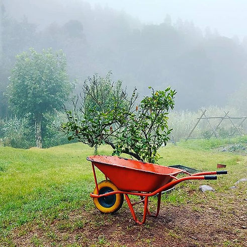 🇺🇲 Lime picking and vegetables plantin