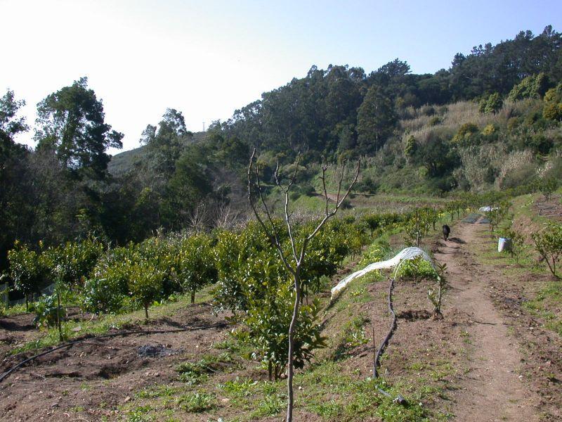 View towards the organic farm