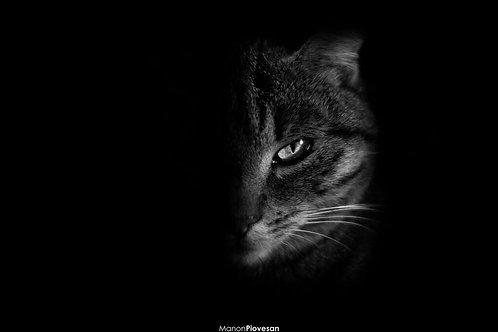 Cat B&W