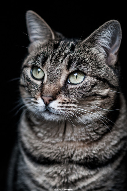 Créer un effet fond noir sur vos photos : mes astuces !