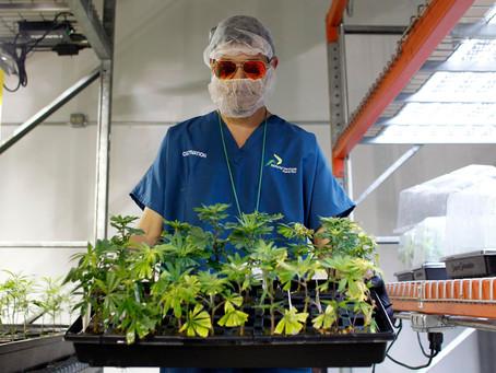 WSHU: Shinnecock To Open Medical Marijuana Dispensary