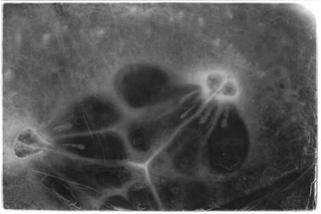 Darkroom Print of a Cucumber Slice
