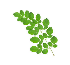 1.-Moringa-Leaves copy.jpg