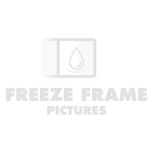 Profile Picture Transparent.png