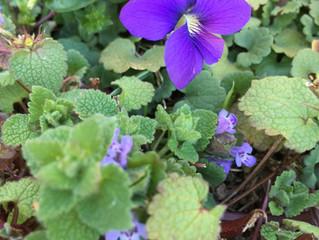 WV Spring Wildflowers