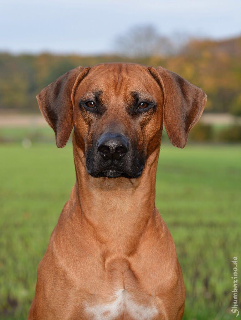 bestvibe-therapie-bms-hund-4