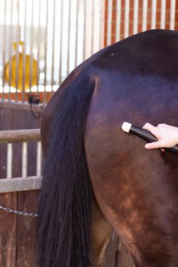 bestvibe Matrix Anwendung am Pferd