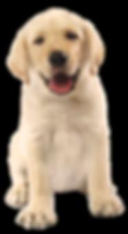 cachorro2.png