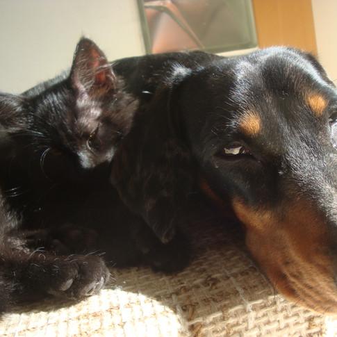 Sunbathing together