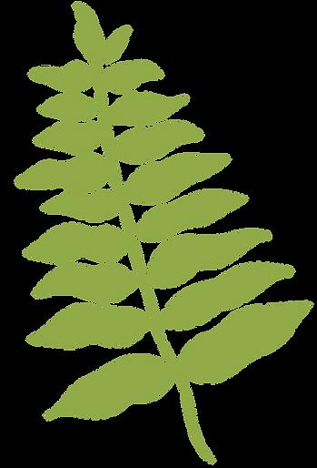 planta-6.png