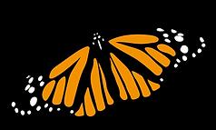 mariposa-danaus-plexippus.png