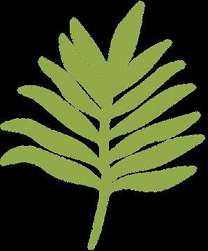 planta-14.png