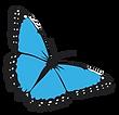 mariposa-morpho-peleides.png