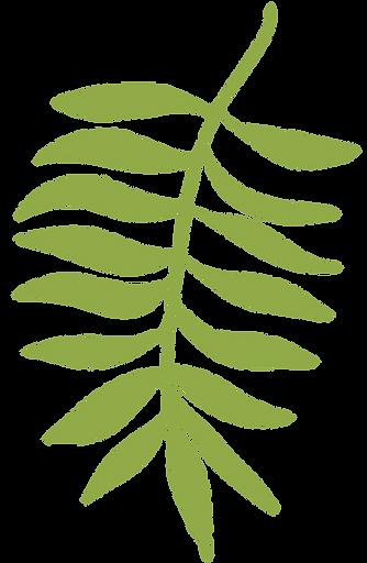 planta-4.png