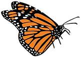 mariposa-danaus-plexippus-2.png