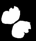 mariposa-leptophobia-aripa.png
