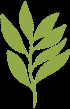 planta-8.png