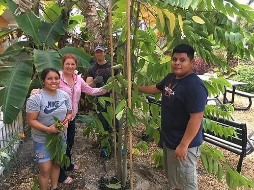 ylang ylang plant tree 3.JPG